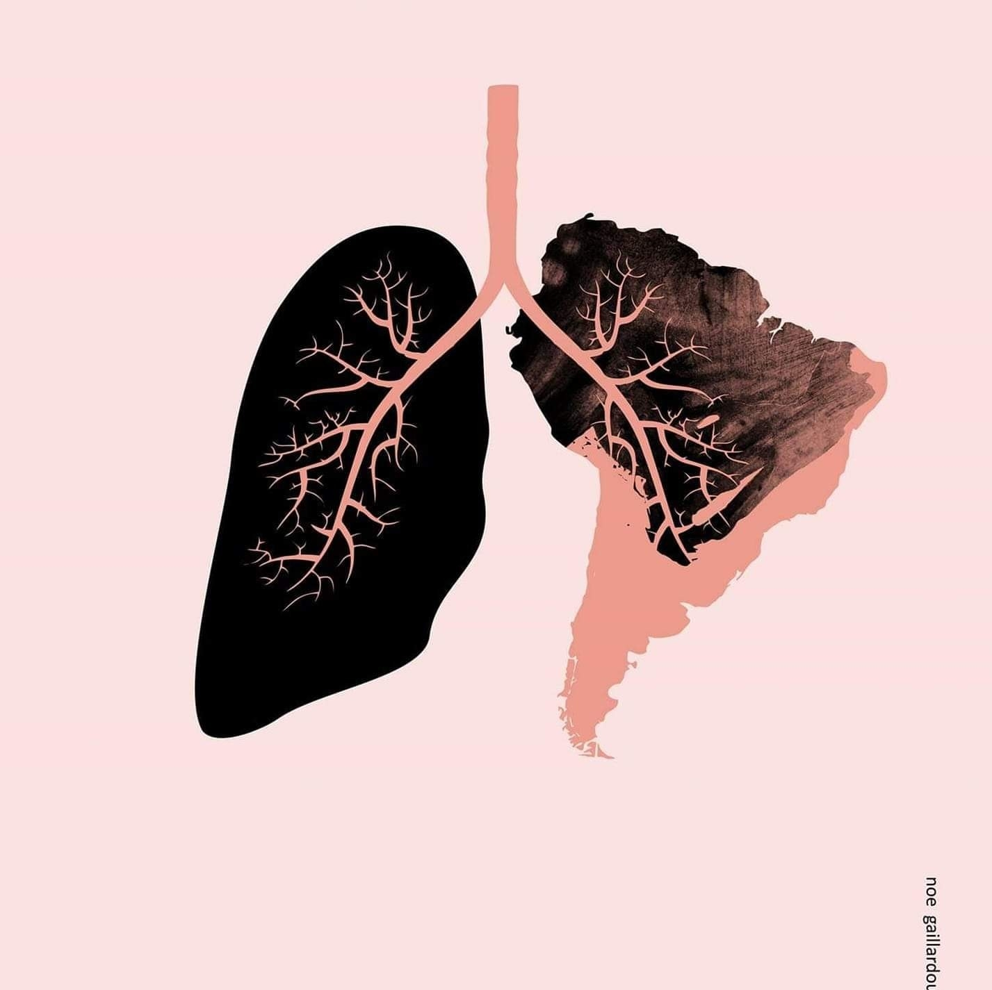 amazon lungs